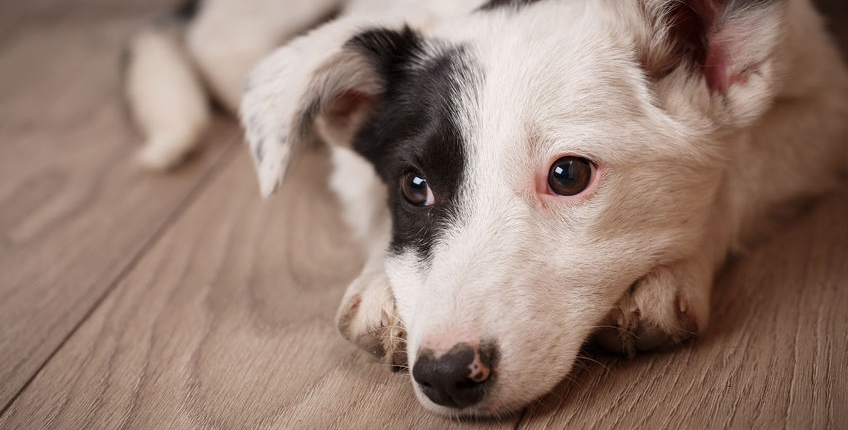 Urinevlekken van huisdieren